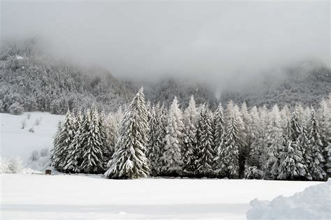 Free picture: snow, winter, frost, cold, frozen, mist