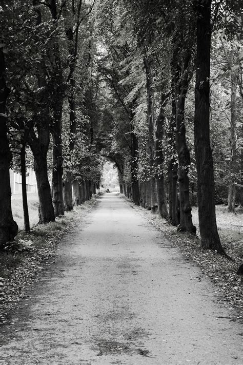Free Images : nature, snow, winter, black and white, road