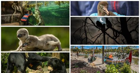Chester Zoo documentary to hit TV screens in February