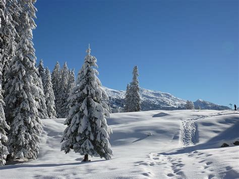 Free picture: snow, winter, cold, hill, conifer, blue sky