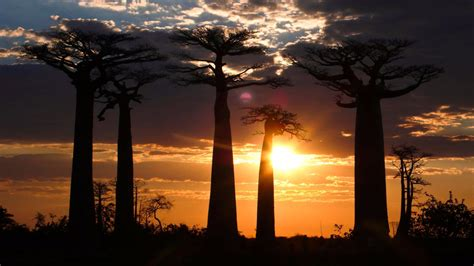 Madagascar's Fantastic Creatures - National Geographic for