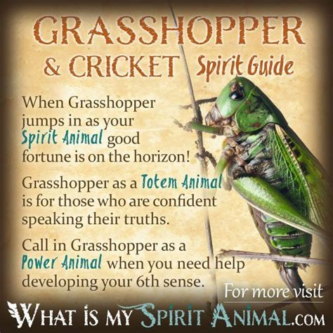 Insect Symbolism & Meaning   Spirit, Totem, & Power Animal