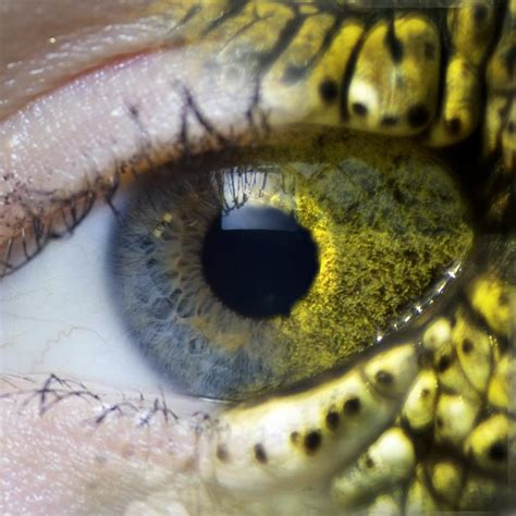 Colors Animals See | Ask A Biologist
