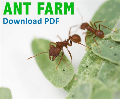 Collecting Ants | Ask A Biologist