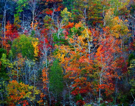 Autumn is in the Air - Photographing Fall Colors -Schiller's